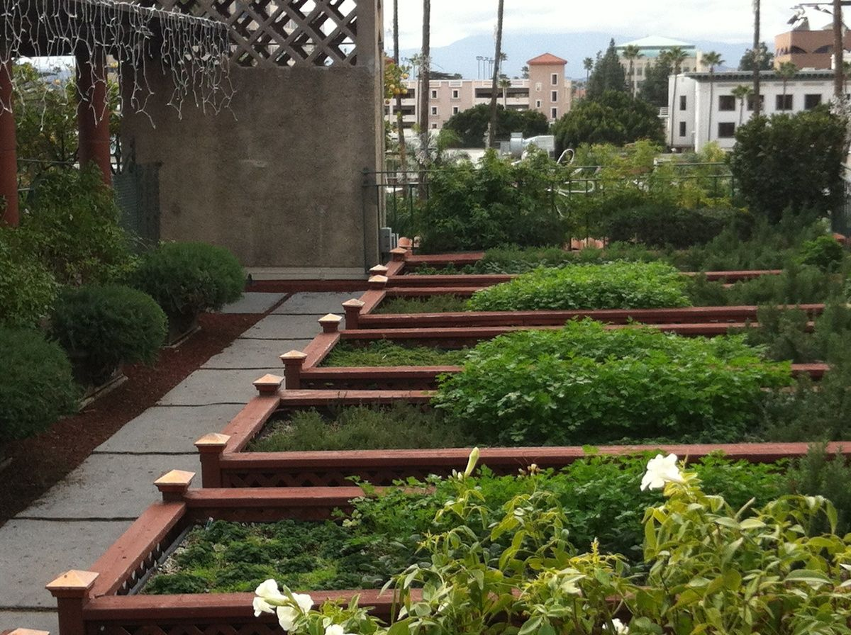 Terraced Garden Bed Idea Rooftop Patio Garden