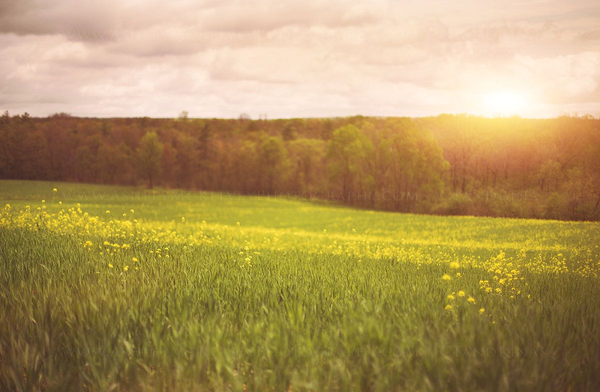 Grass Green Forest On Spring Sunset Light Background Stock Photo rh