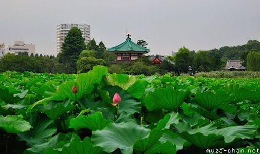 Tokyo Shinobazu Pond It is known that long, long time ago, the pond that…