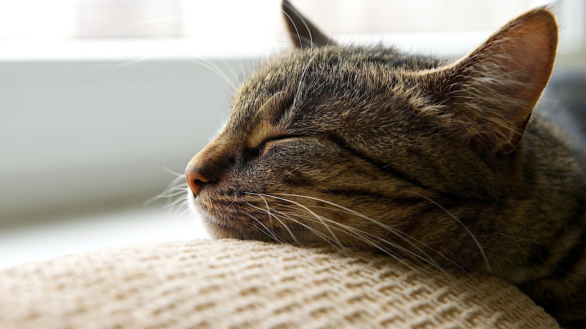 How To Help A Cat Adjust To A New Home Cat Care Cats Cat Care Cat Hacks
