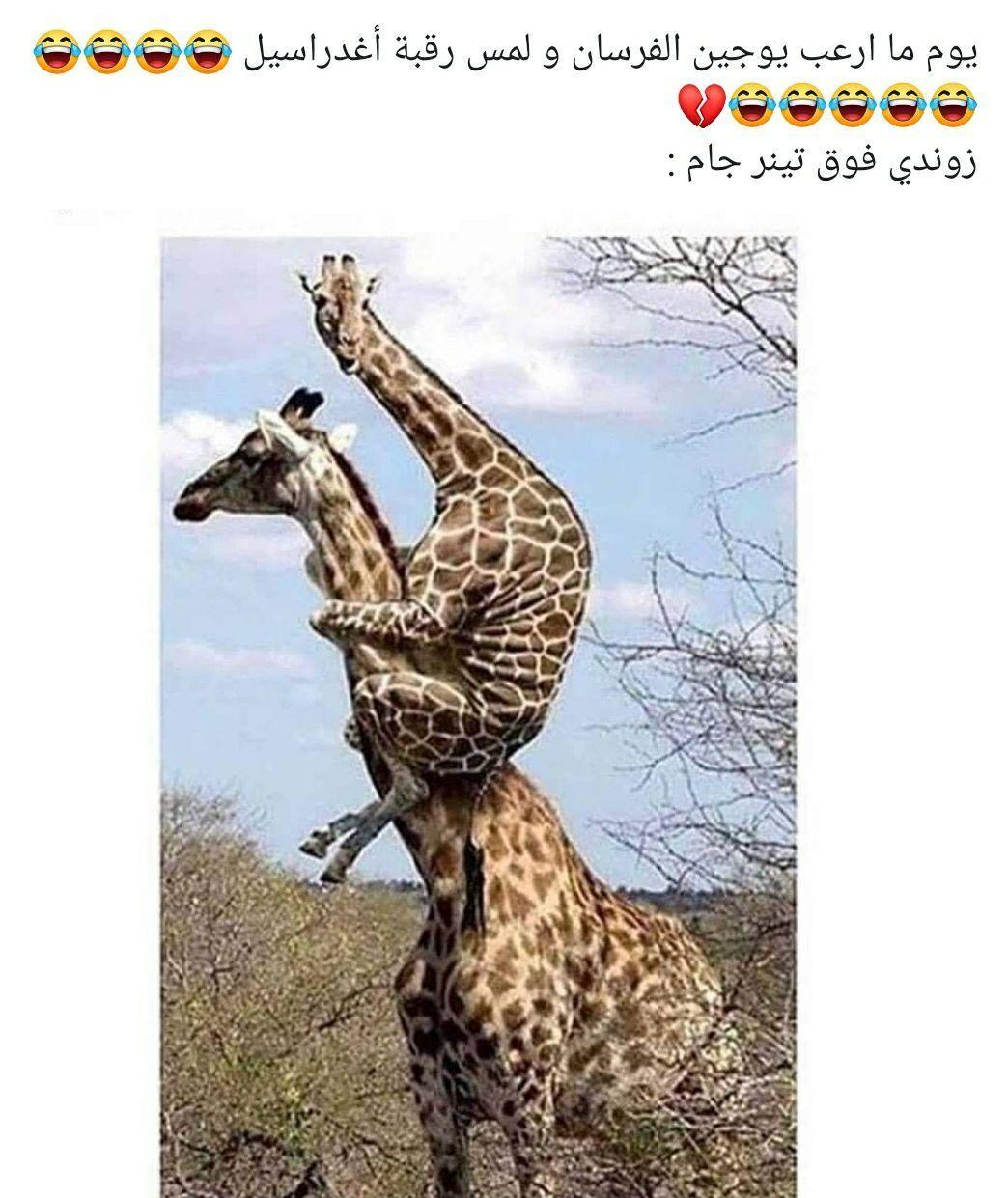 صور لشخصيات توبازيوس صور بلا هدف Cute Animals Student Memes Animals