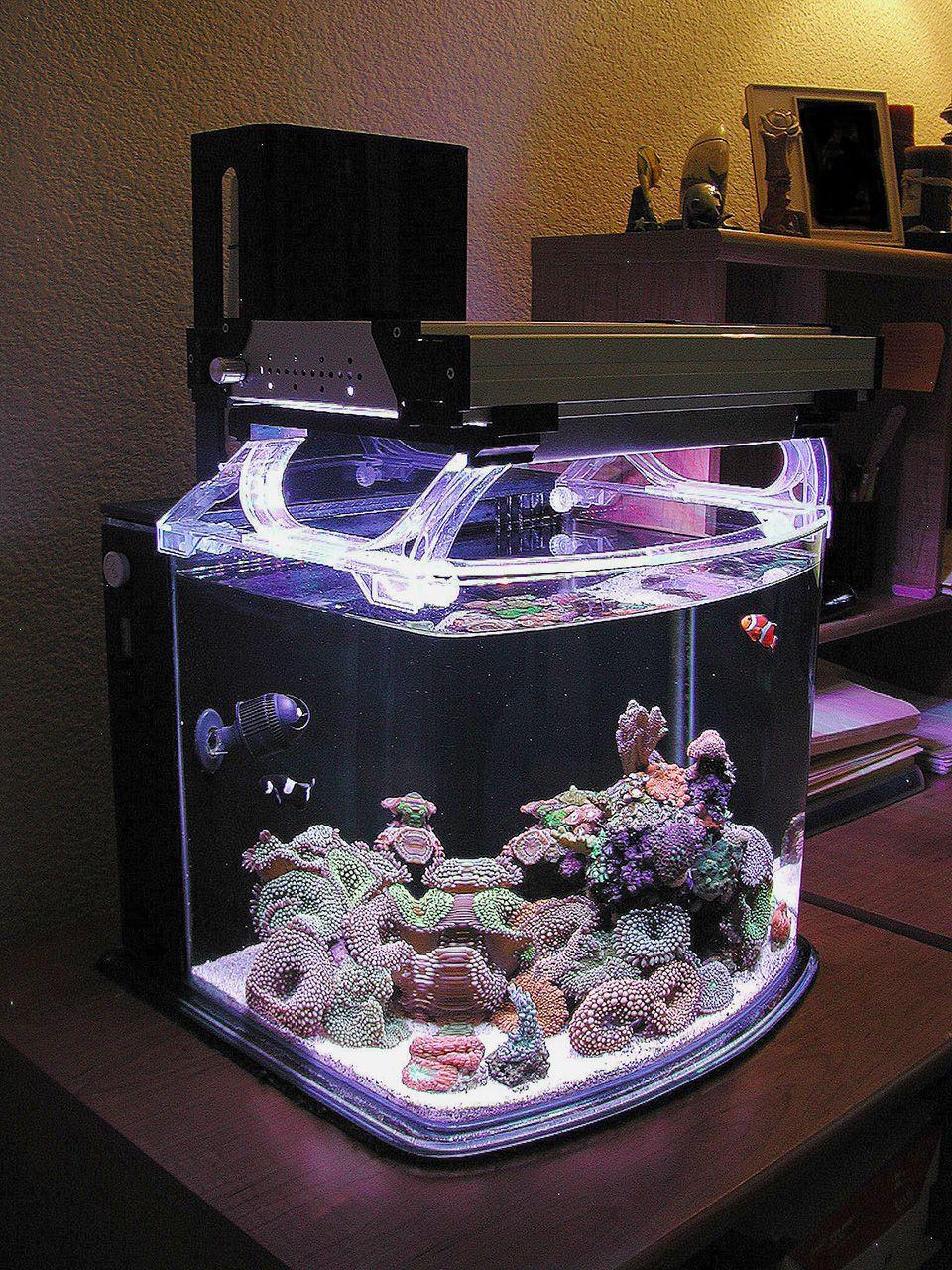 Nano Sapiens With Images Coral Aquarium Coral Reef Aquarium Tropical Fish Aquarium