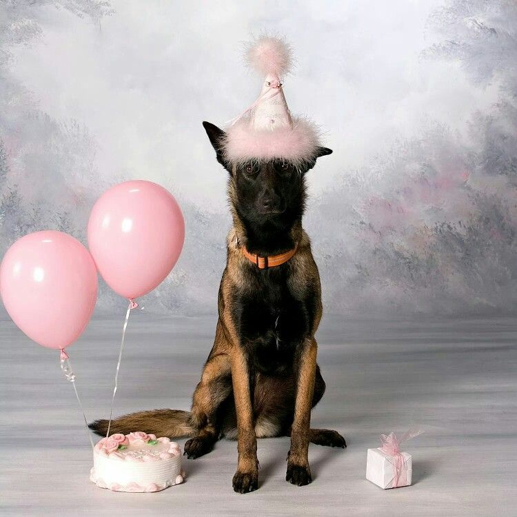 Happy Birthday Dog Birthday Pictures Dog Birthday Animals Images