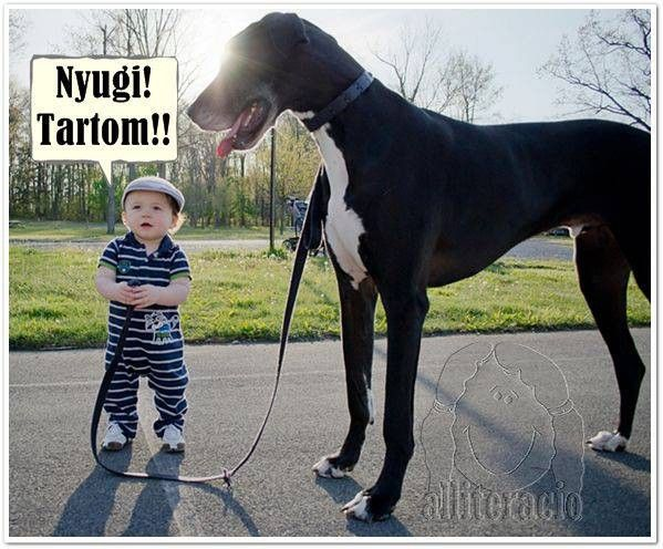 vicces, humoros, aranyos, állatok, képek, kutya, kisfiú, dog,