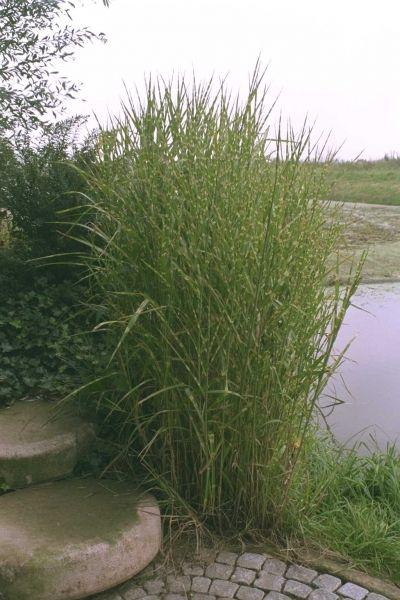 Plantengids - Tuincentrum Interflower