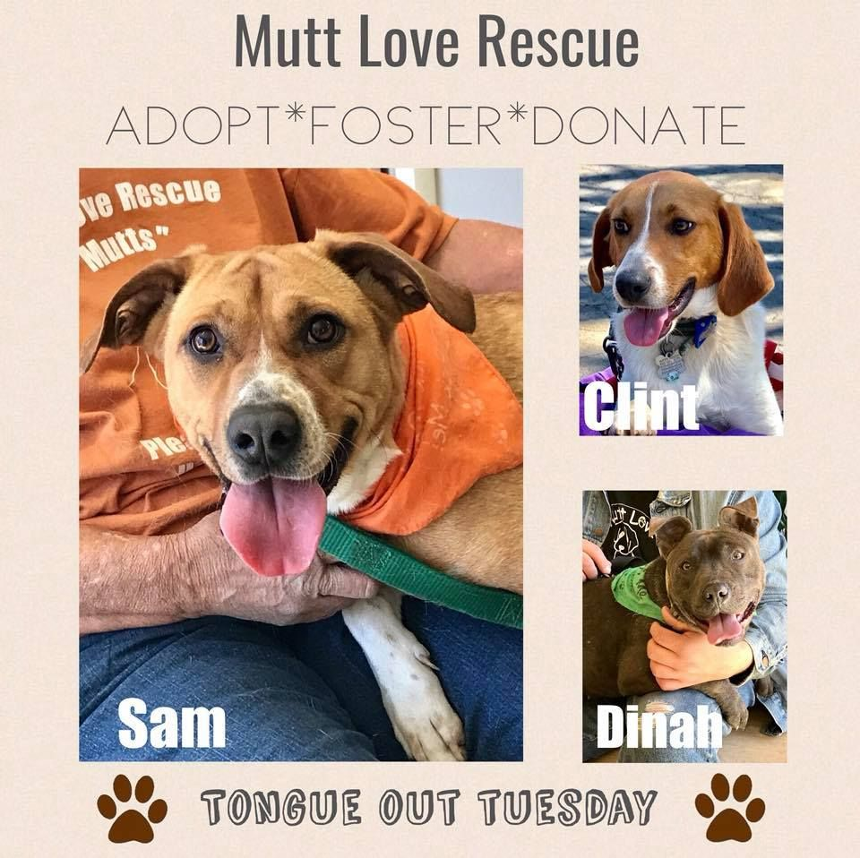 Tongue Out Tuesday Adoption poster from Mutts Love Animal