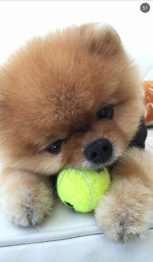 He is so cute!! :D