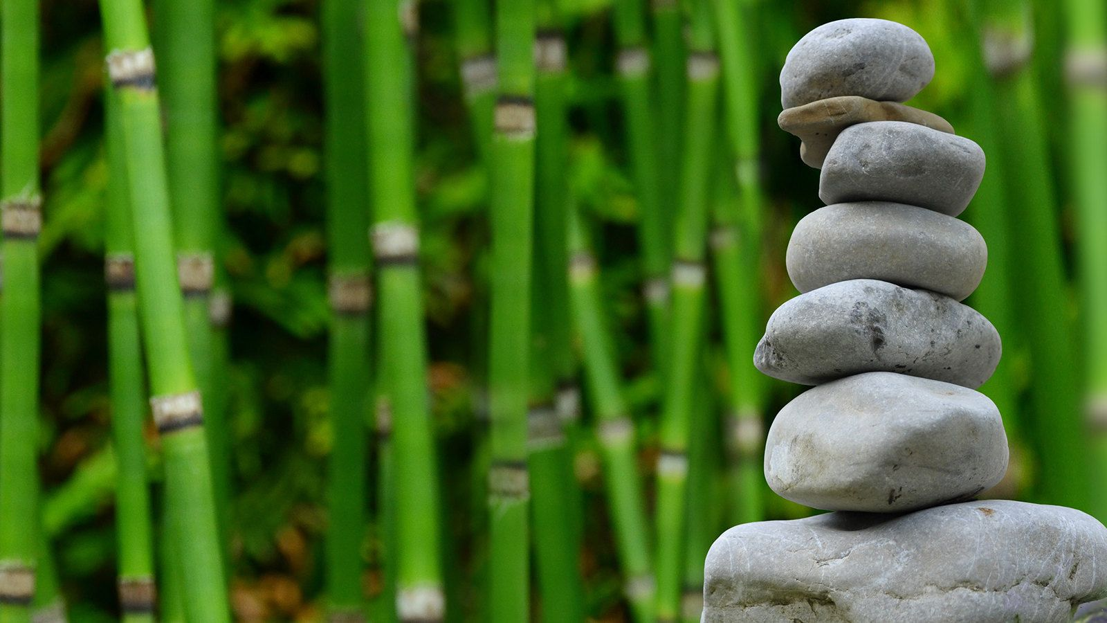 הדברה ירוקה Zen garden, Relaxing music, Meditation