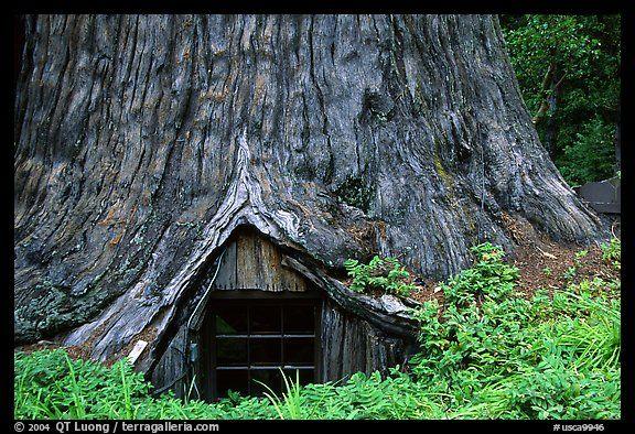 Houses Inside Trees Tree House A Room Inside The Hollowed Base