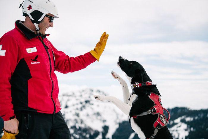 Ski Utah Powder Puppies The Making Of An Avalanche Dog Snow