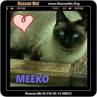 Siamese Cat for adoption in Highland, Michigan Meeko