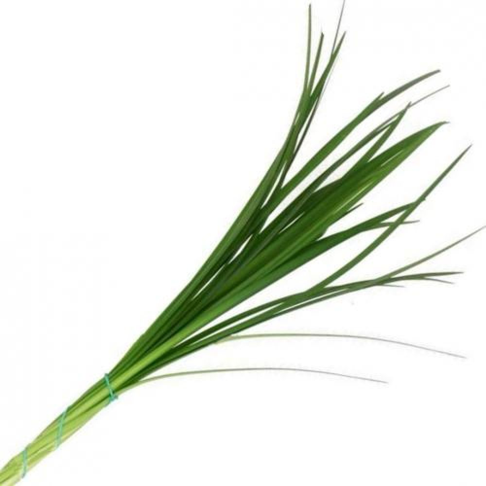 Fresh Discount Greenery - Lily Grass