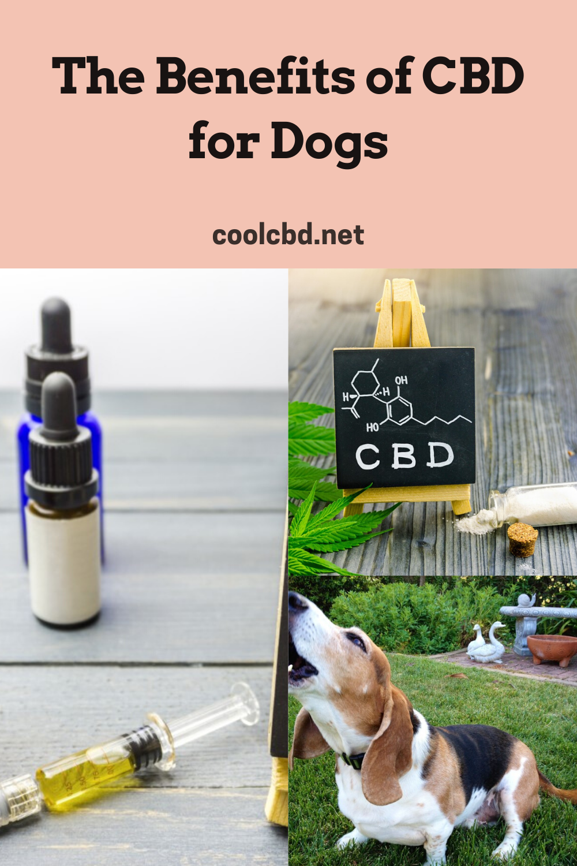 The Benefits of CBD for Dogs #cbd #cbdoil #dogs #dog #doghealth