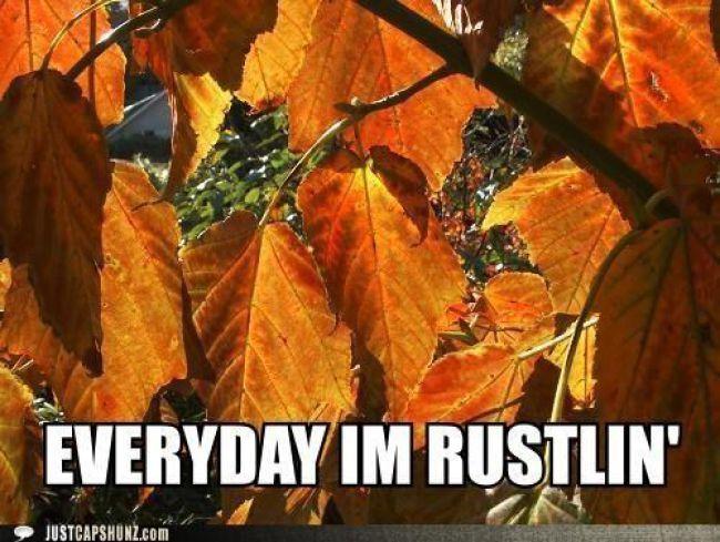 Happy Fall Ya Ll Monday Memes Fall Memes Fall Humor Fall Is Here