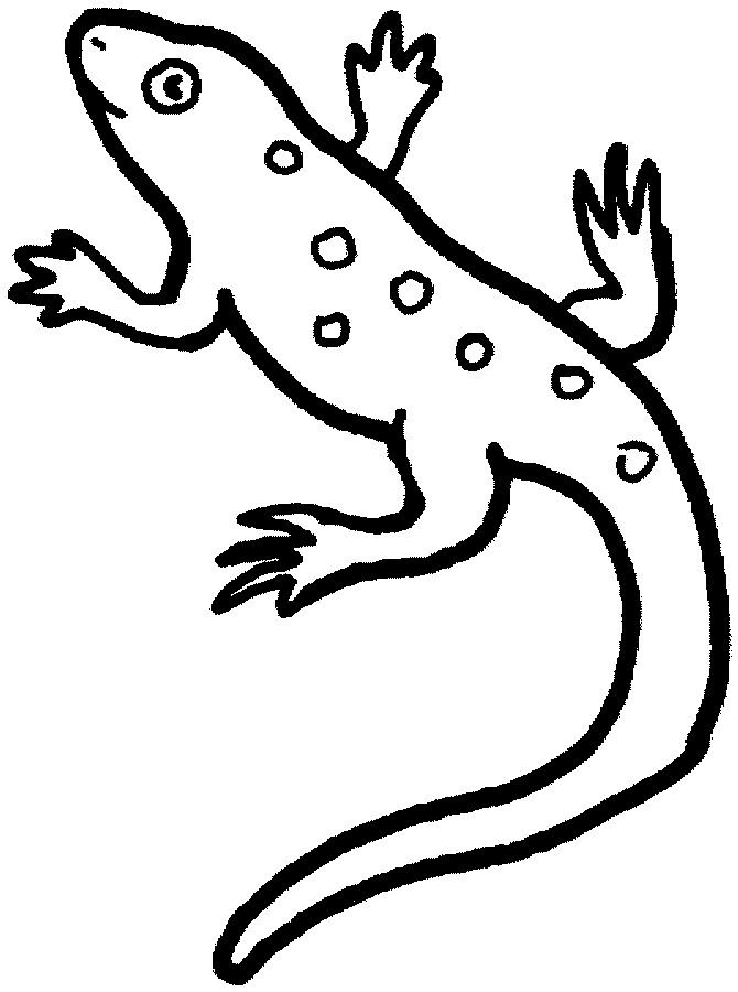 L Lizard Animal Coloring Pages Turtle Coloring Pages