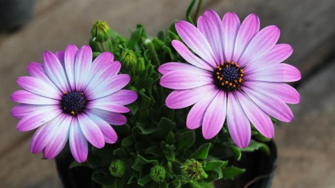 Siete plantas de primavera que necesitan mucho sol d a a for Plantas de exterior que no necesitan sol