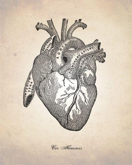 Human Heart, Human Anatomy Heart Art Print, Human Anatomy Drawing ...