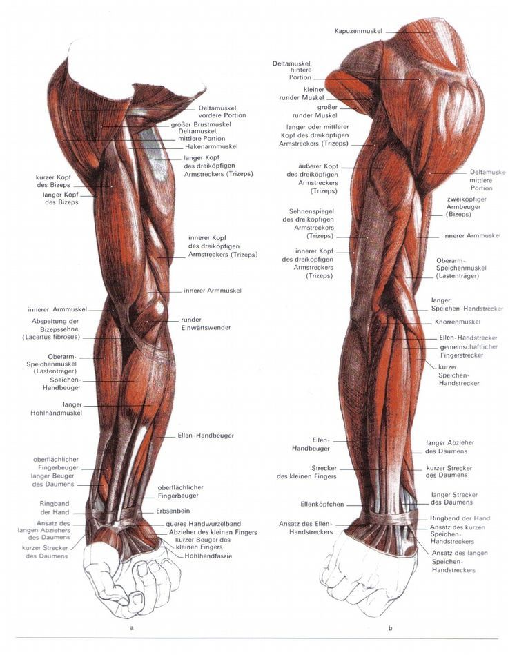 bammes anatomy - Пошук Google | Bammes Gottfried | Pinterest | Anatomy