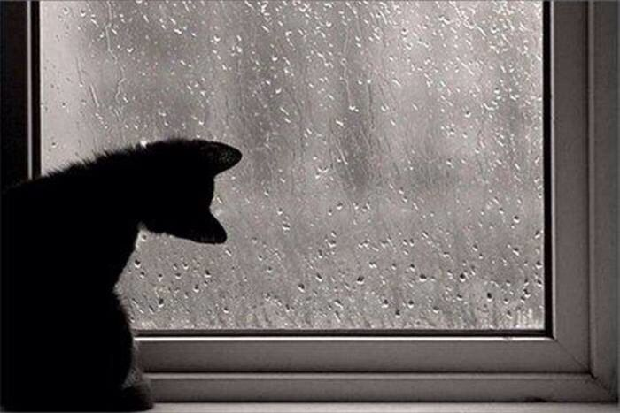 Image result for Cat at a rainy window