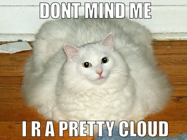 0200bdb009c8a734c3eb6dba050b4ce0 fat fluffy white cat photo this photo was uploaded by