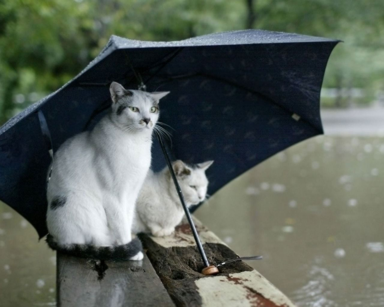 ai gatti non piace la pioggia