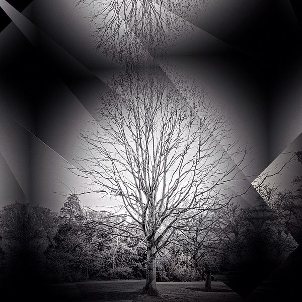 Tree Line by M.A available now.