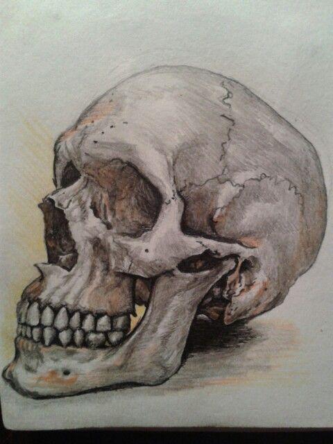 Mixed media skull sketch