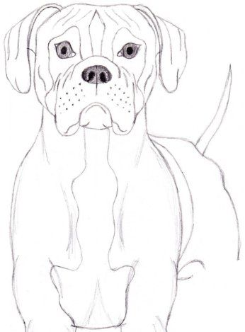 How To Draw A Dog Boxer Drawing In 2019 Pinterest Dog Pencil