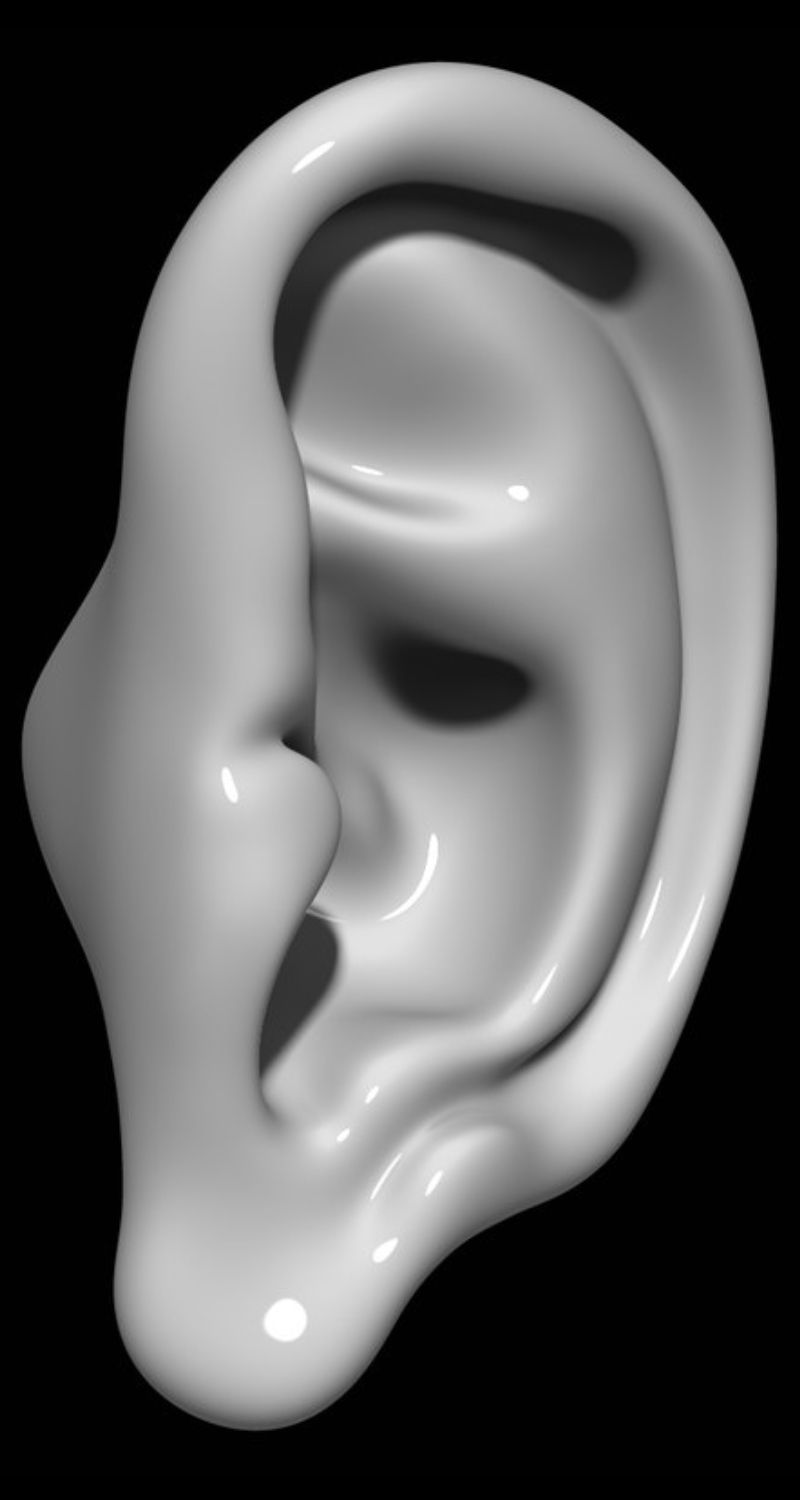 Ear 3d model | |ear|human|part|head|sculpture|hearing|earing