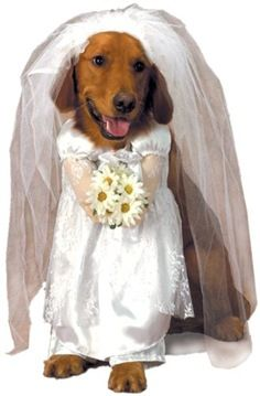 Dogs Need Wedding Dresses Too