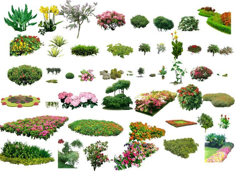 Landscape plants shrubs collection architectural for Plant landscape design