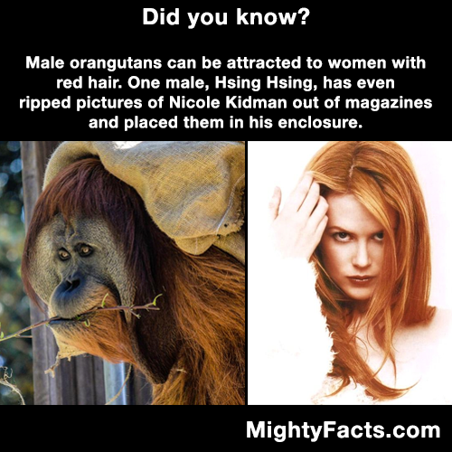 Orangutan fact | Well that's interesting. | Pinterest | Funny, We ...