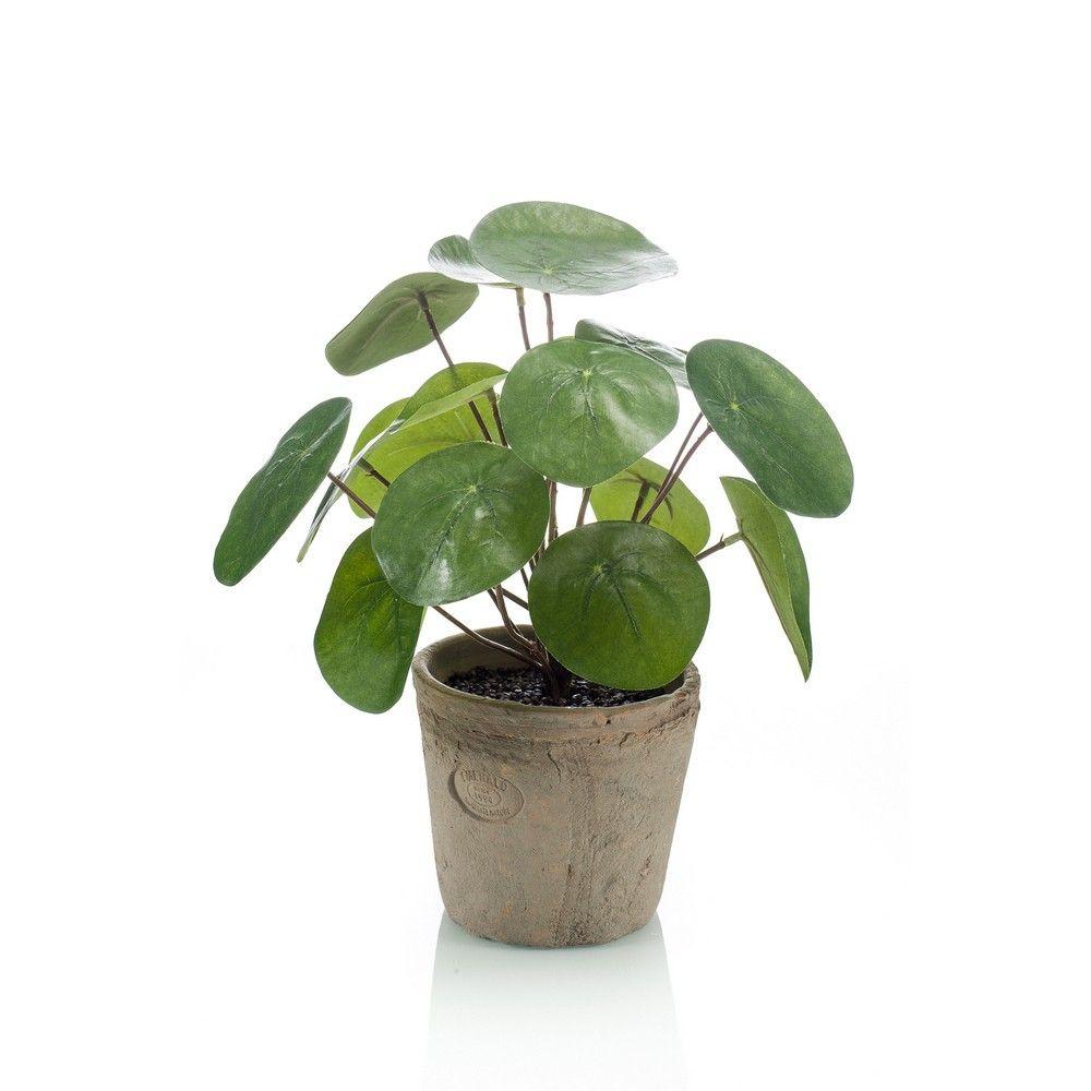 Pianta Da Ufficio Poca Luce pianta pilea | piante artificiali, piante, negozi di arredamento