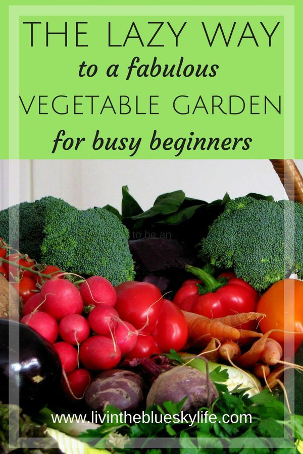 Easy Vegetable Gardens And Backyard Chickens For Busy 400 x 300