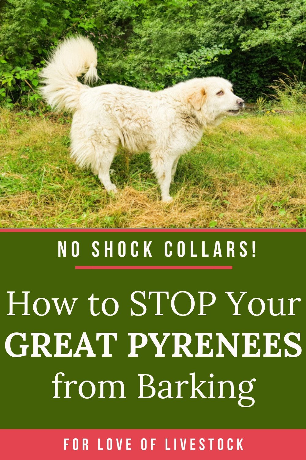 You Don T Need Shock Collars Or Other Cruel Methods To Prevent