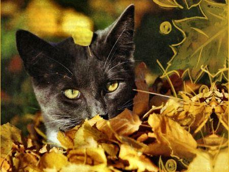Autumn Kitty Cats Wallpaper Id 1188022 Desktop Nexus Animals Cats Cat Wallpaper Free Cats
