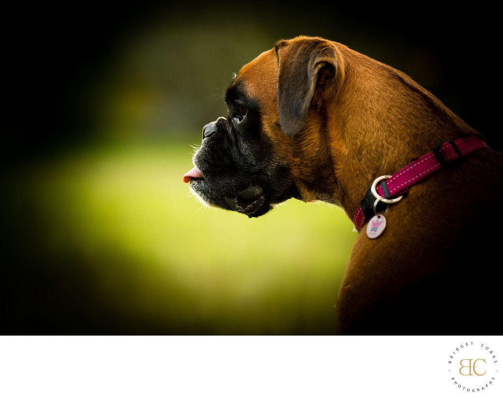 Bridget Corke Photography Sandton Johannesburg Outdoor Pet