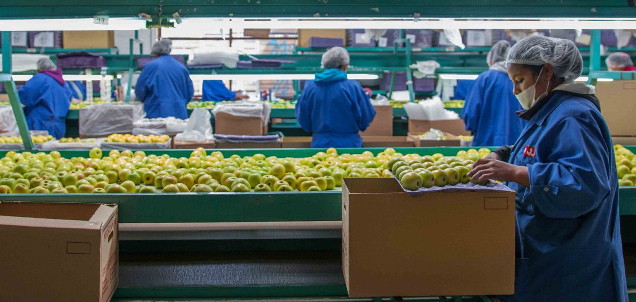 Mexico Is Waging War Against American Apples apples