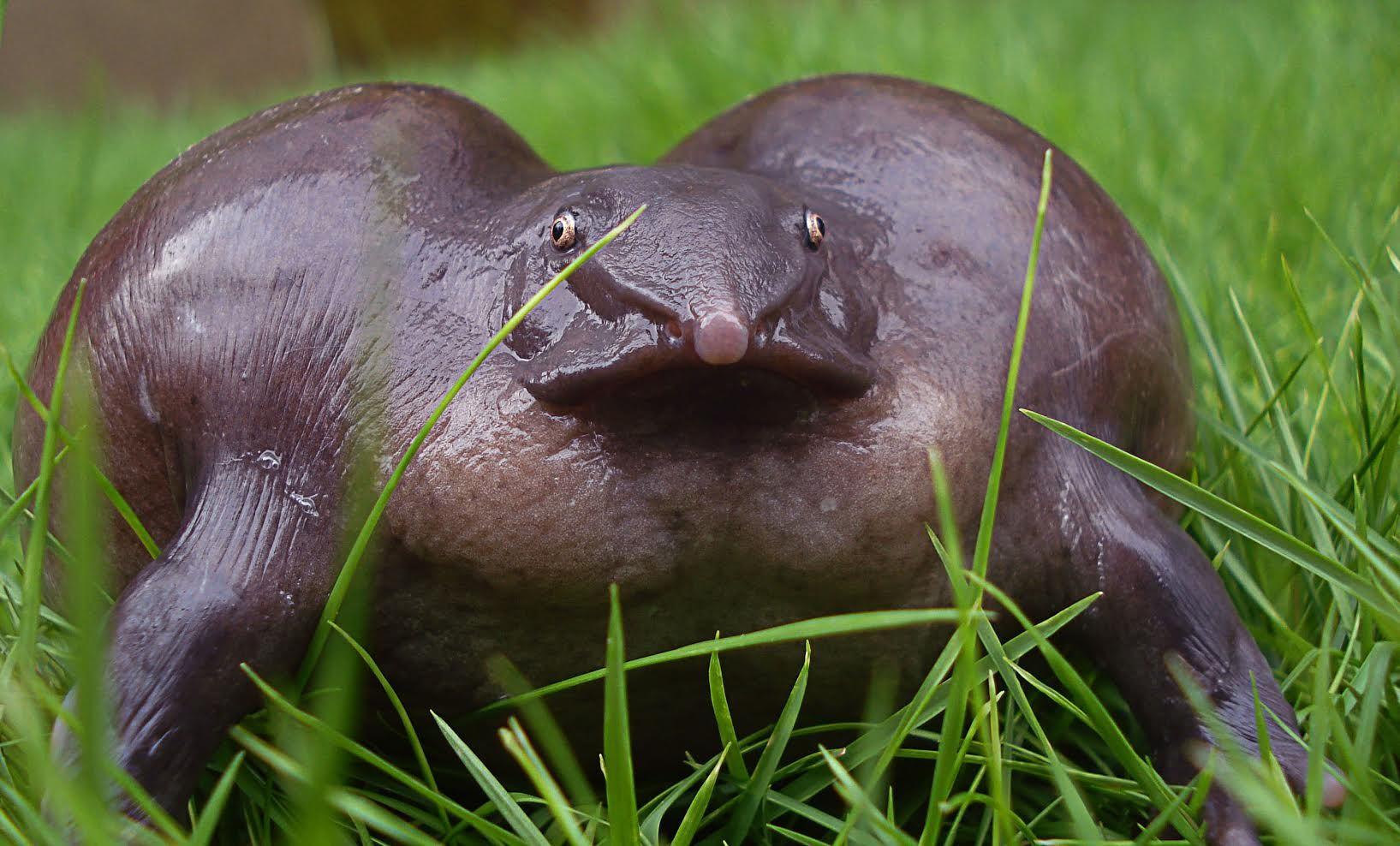 Yikes! Crazy purple frog purplefrog weirdanimals