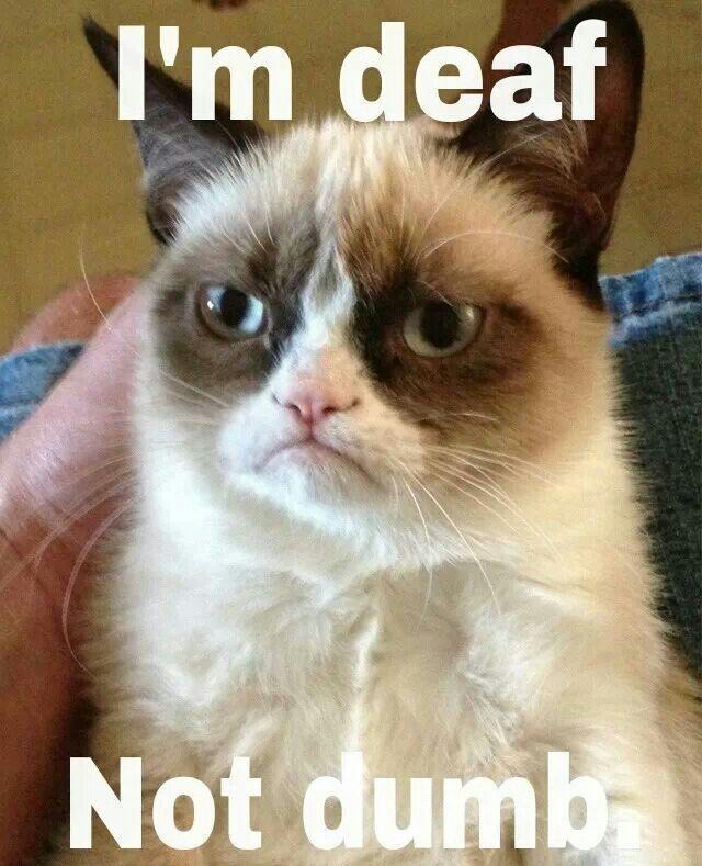 Thank you #Grumpy Cat! :) Being #deaf is ok!