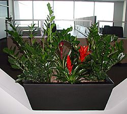 Bromeliad Plant   Designs U0026 Interior Office Plantscapes.