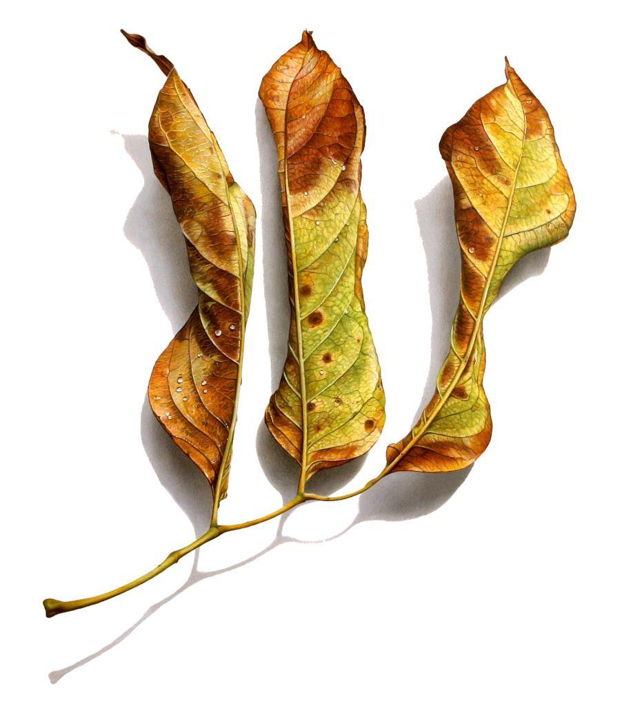 David Morrison - Fallen Series No. 8 | | Botanical ...