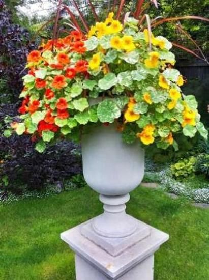 Beautiful Flowers And Yard Landscaping Ideas