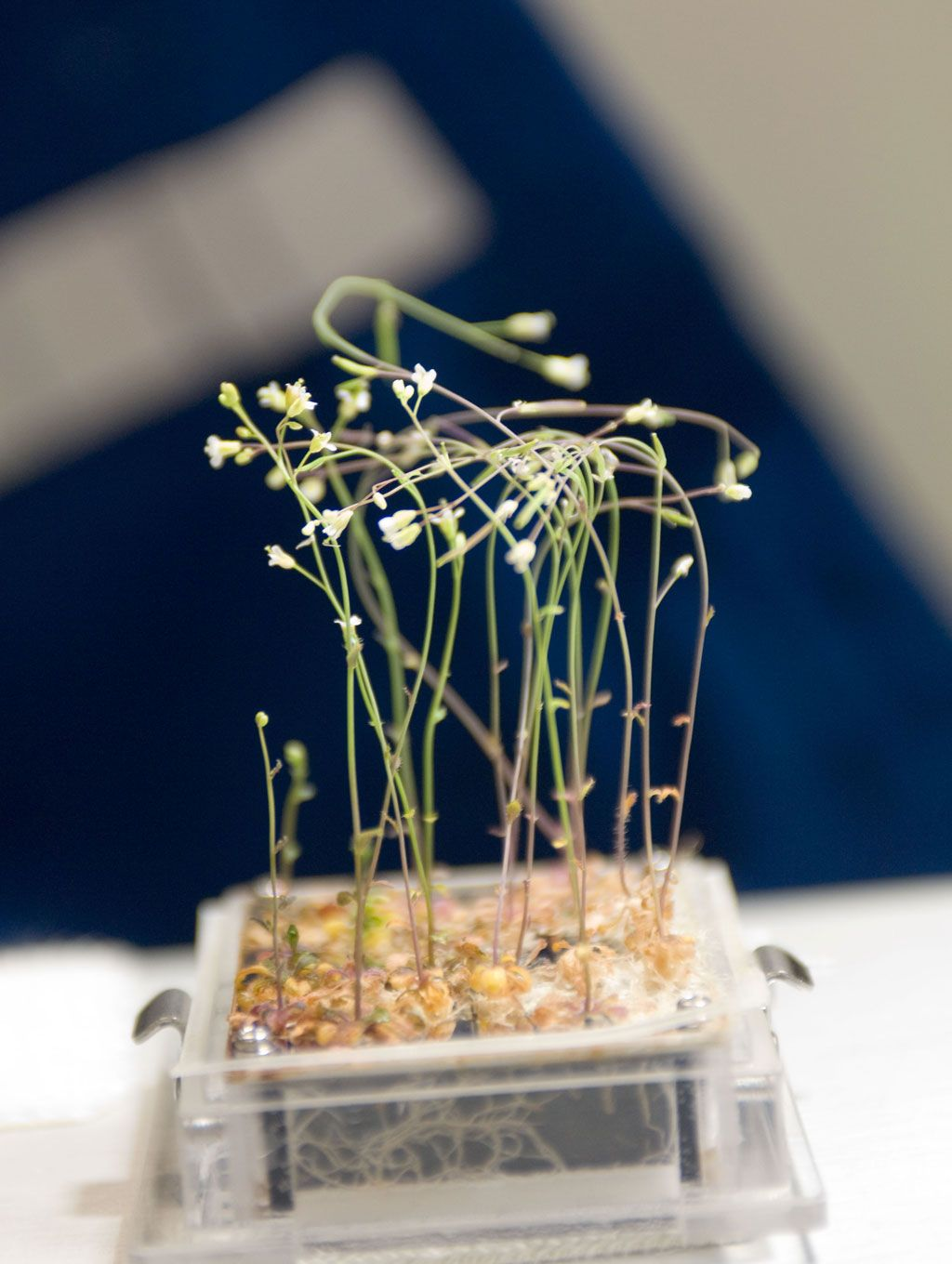 How Plants Deal With Space Travel | Space travel, Biology ...