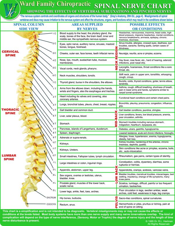 Chiropractic Spine Chart Symptoms Chiropractic Spine Nerve Chart