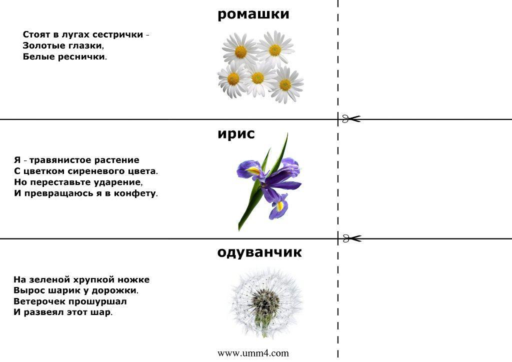 лида притягивает загадки про цветы с картинками вымерли травоядные динозавры