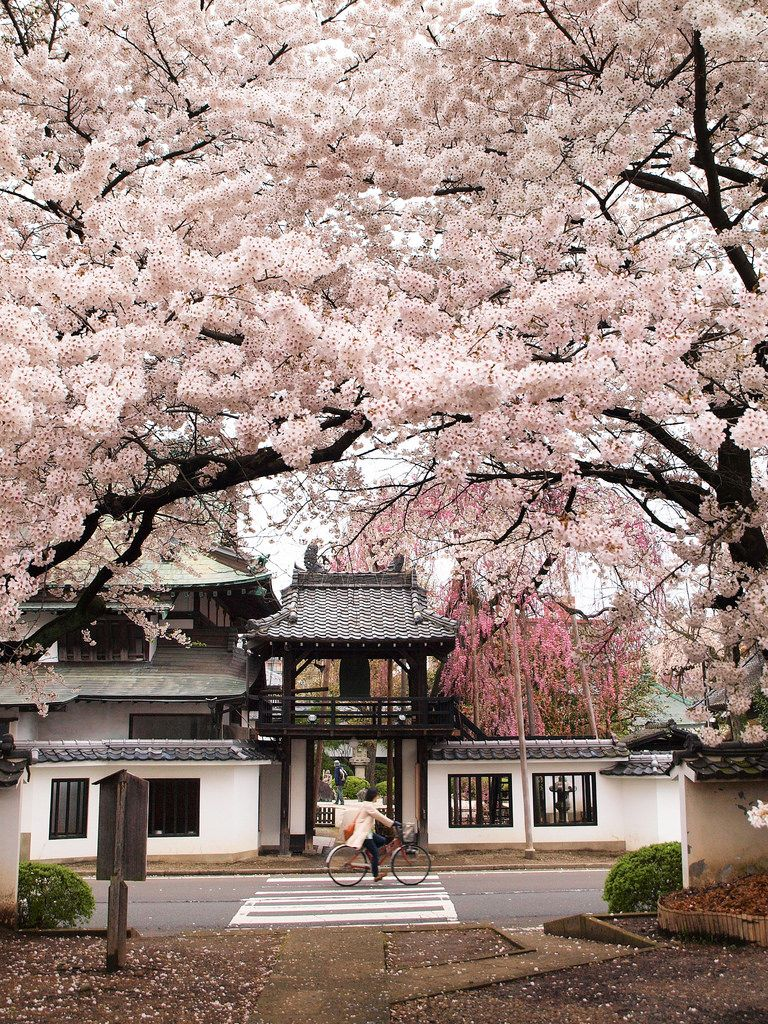 Pin By Suzanna H On Japonism Japan Landscape Beautiful Places Japan Travel