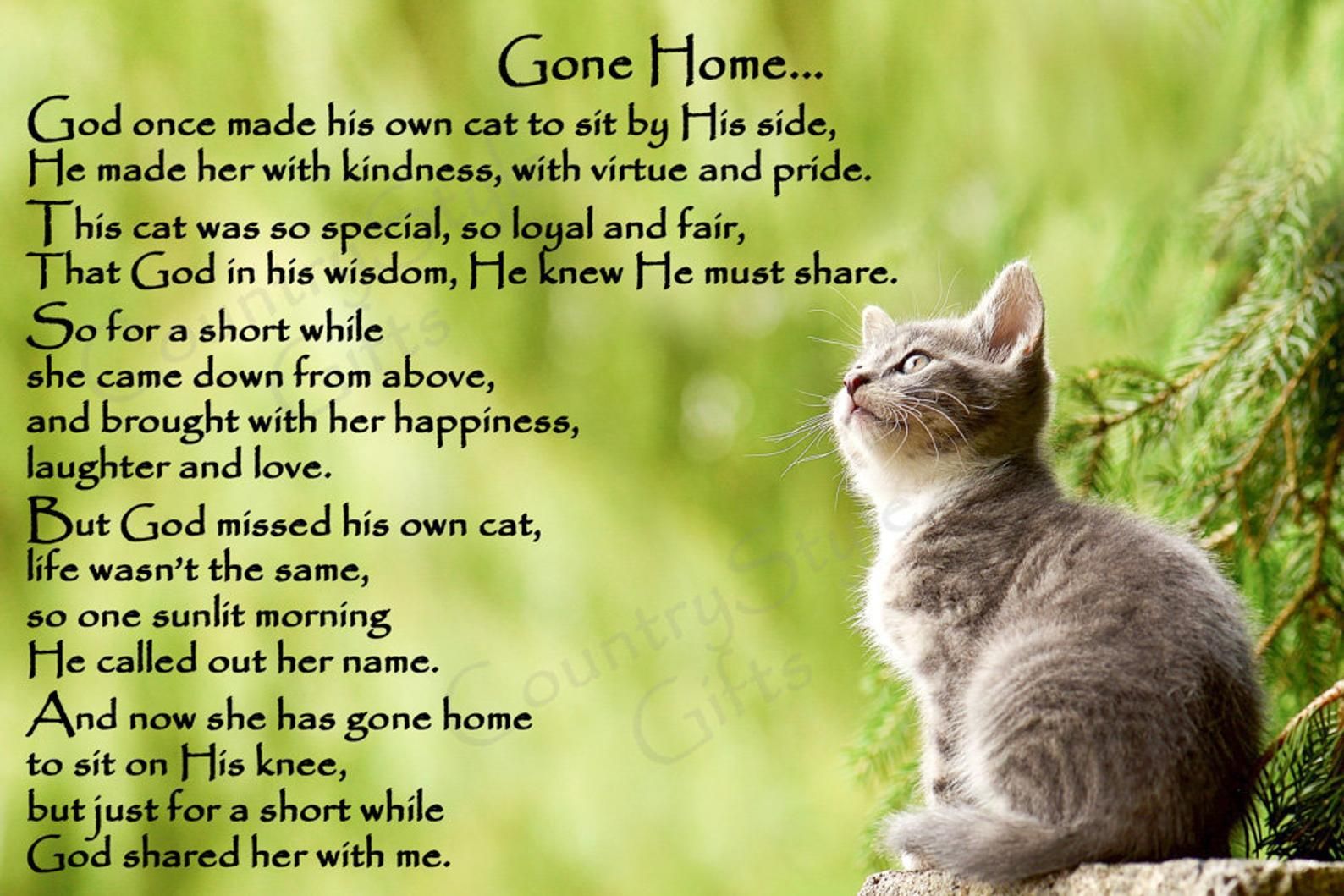 Cat Memorial Pet Loss Bereavement Rainbow Bridge Fridge Magnet Plaque Gift Cat Memorial Cat Loss Pet Grief