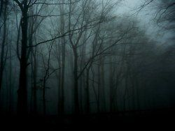 ominousplaces:    December fog, by peps4o.