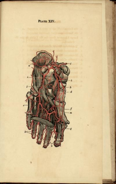 'Anatomical description of the arteries of the human body' by various authors, illustrations by: Josiah F. Flagg (Josiah Foster), 1813. Plate XIV.